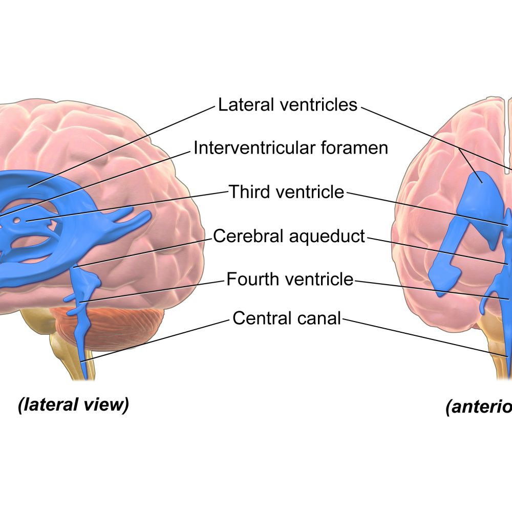 Ventricular System Of The Brain The cerebral aqueduct is located within the mesencephalon and connects the third ventricle in the diencephalon to the fourth ventricle in the region of the mesencephalon and metencephalon. ventricular system of the brain