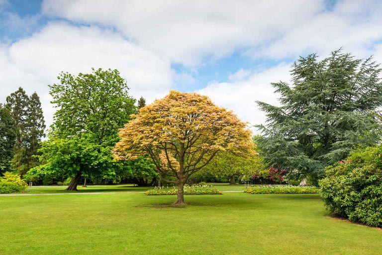 Trees at a park