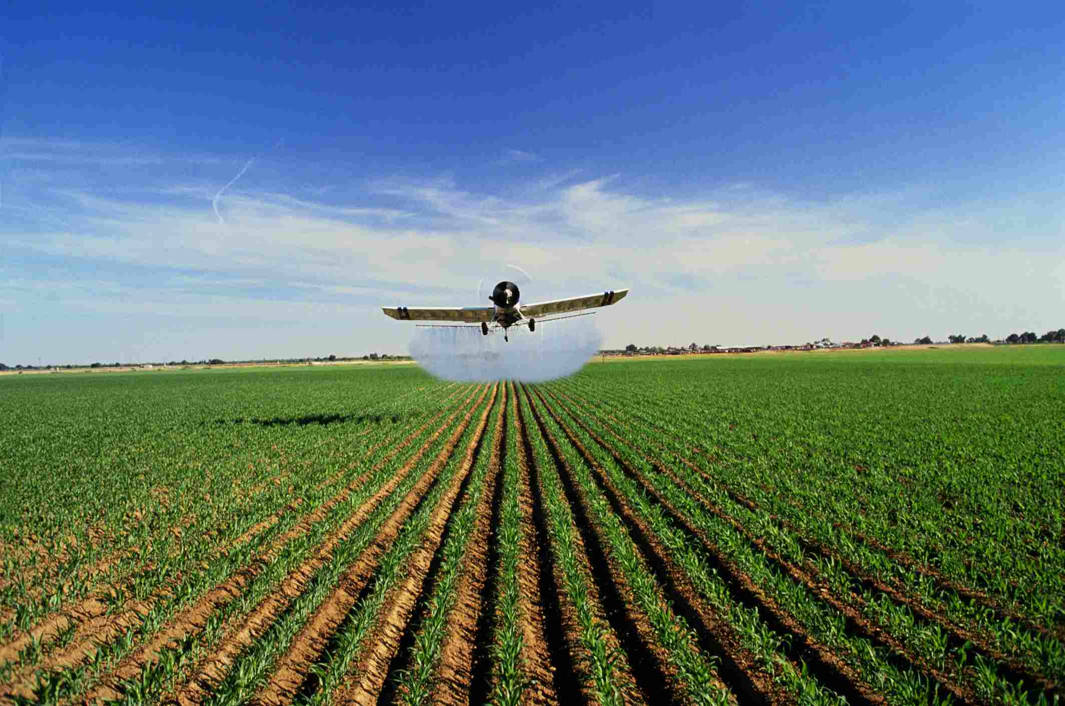 Plane spraying pesticide on maize (Zea mays), California, USA - stock photo