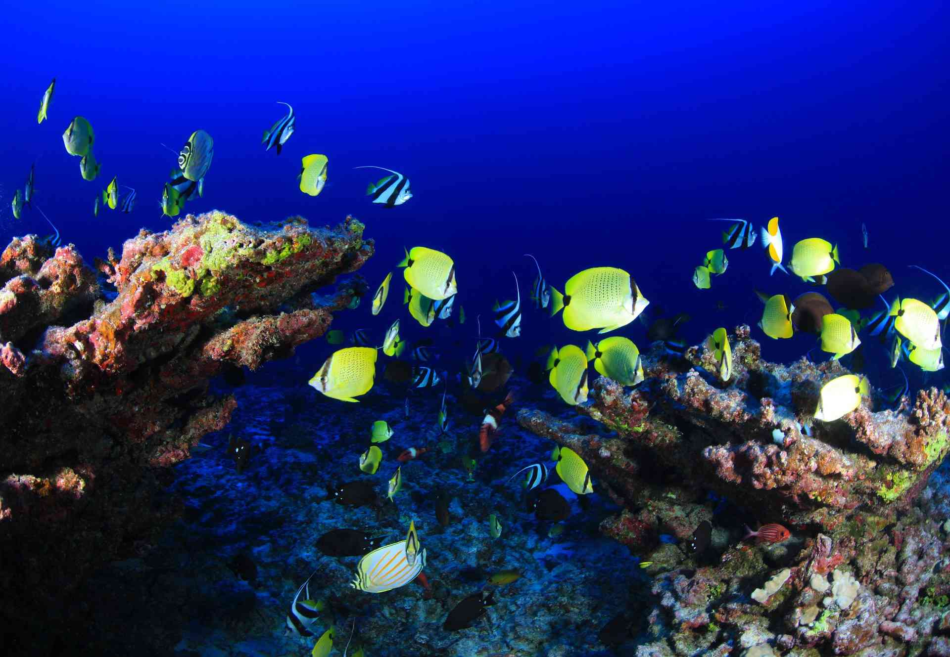 Underwater view of a coral reef with tropical fish swimming around.