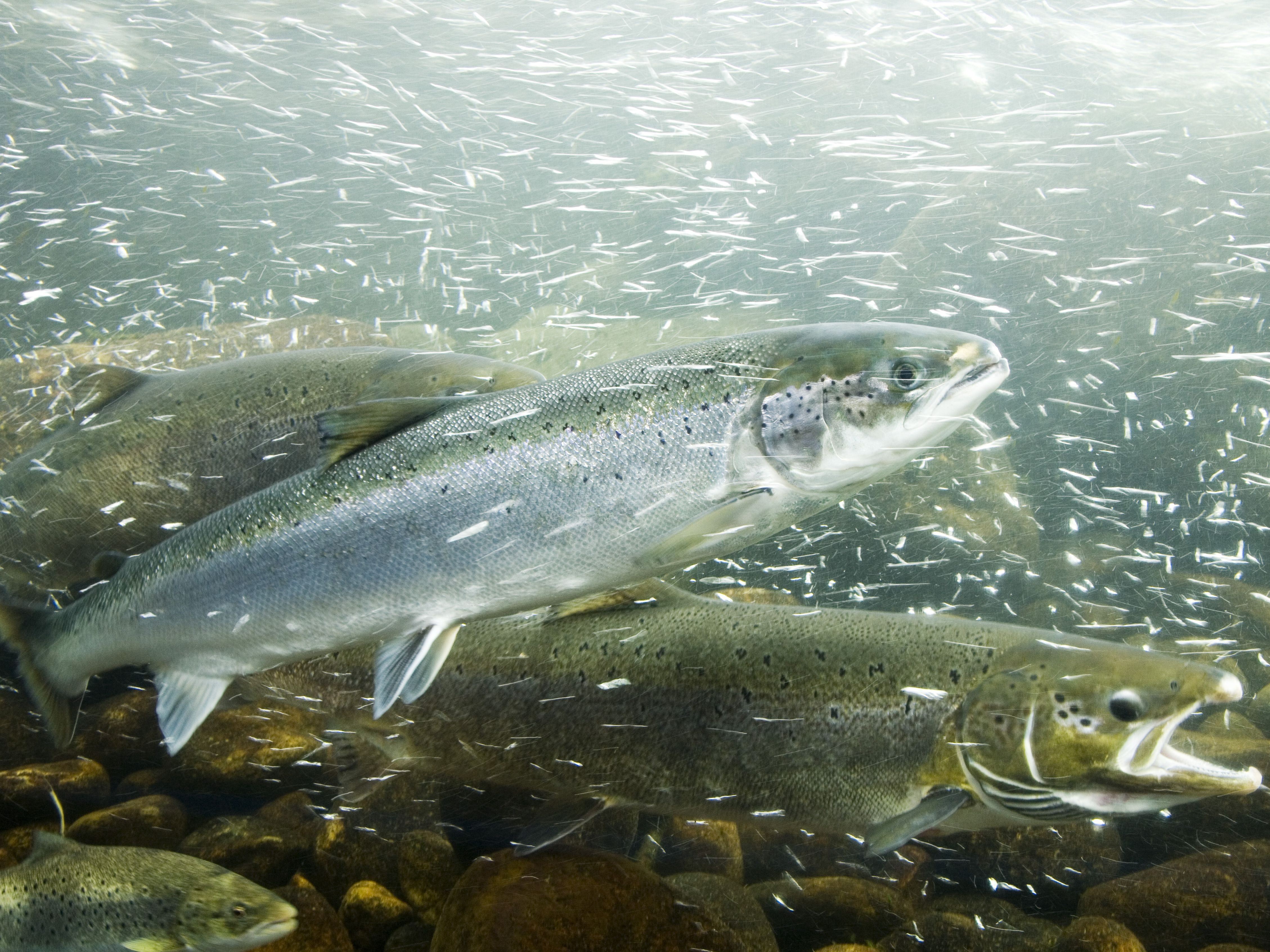 German-English Glossary of Fish and Marine Animals