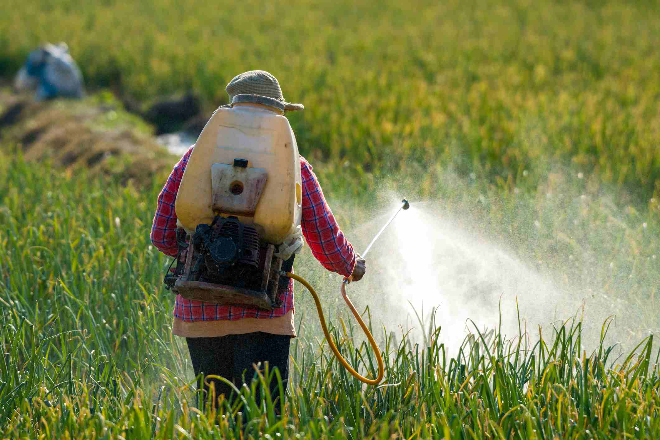 Farmer spraying pesticide. - stock photo