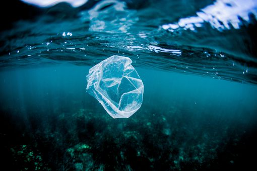 Floating plastic bag in the ocean that can be mistaken for jellyfish by sea turtles