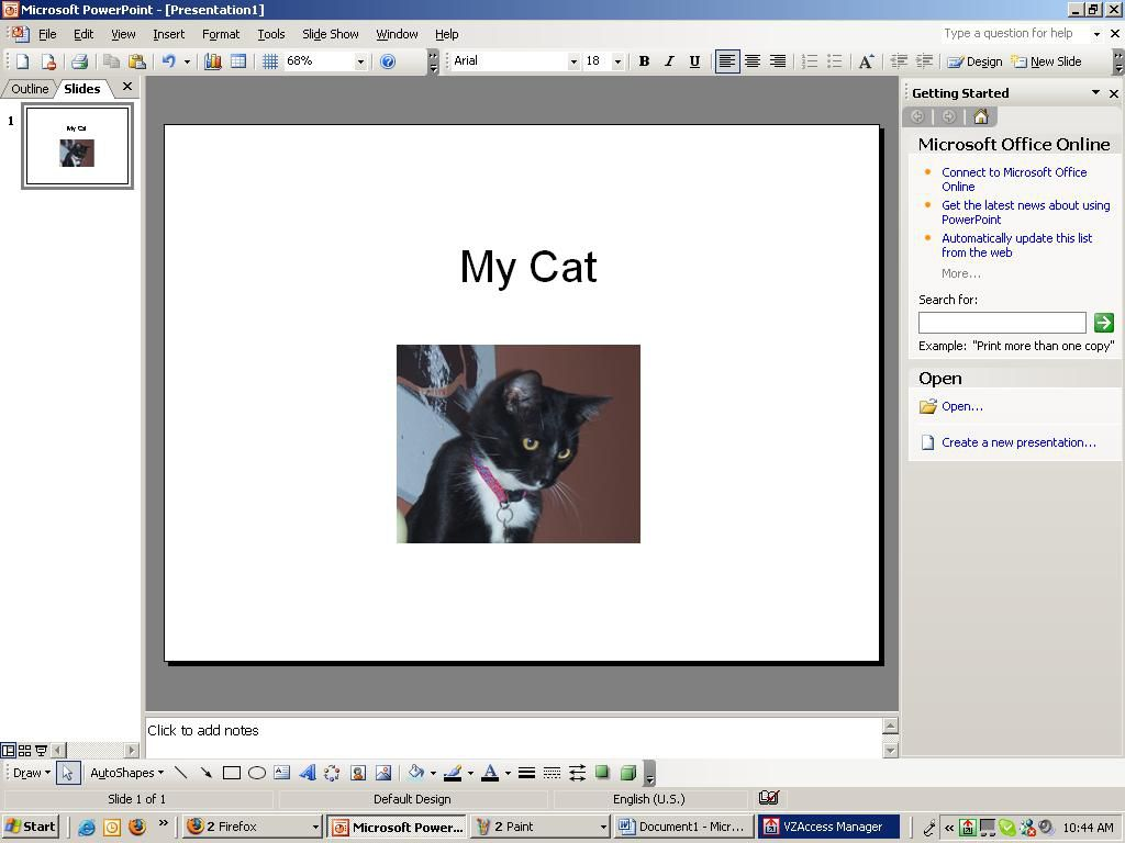 Screenshot of a PowerPoint slide showing a photo of a cat