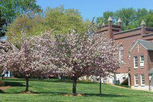 Belmont Abbey College