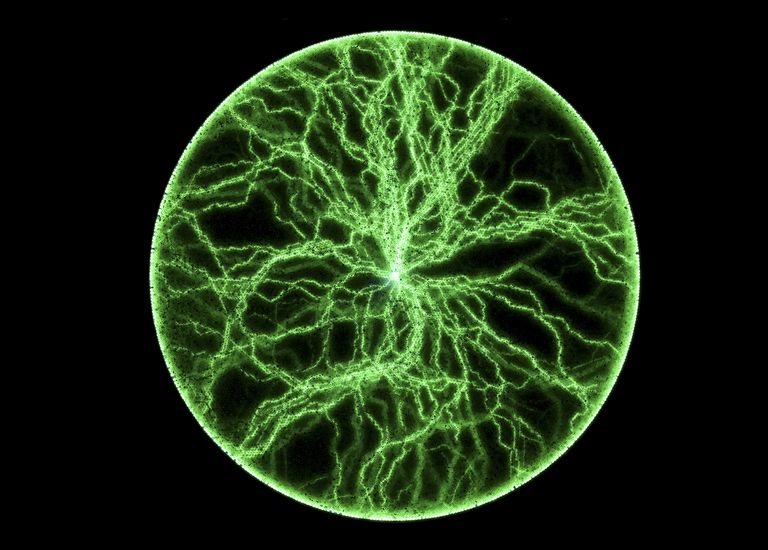 Lichtenberg figures trace the path electricity takes through a material.