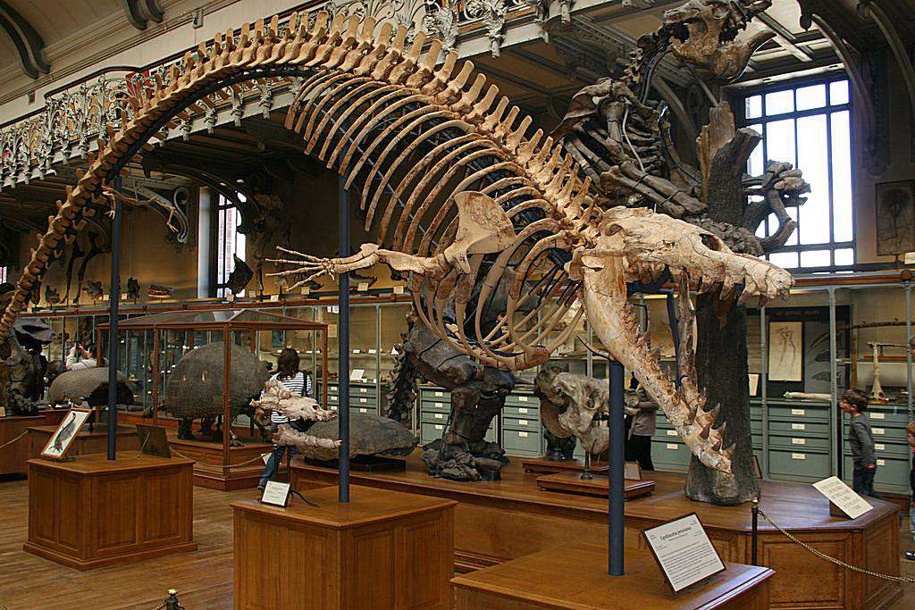 A <i>Basilosaurus</i> skeleton swoops down from the ceiling with arched back and mouth wide open at the French National Museum of Natural History in Paris