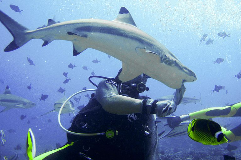 Through television and horror movies, we have been taught to fear many sea animals and fish that pose no danger to scuba divers. Sharks are a perfect example!