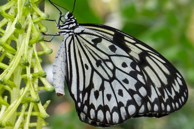 Things to Know Before Visiting a Butterfly House