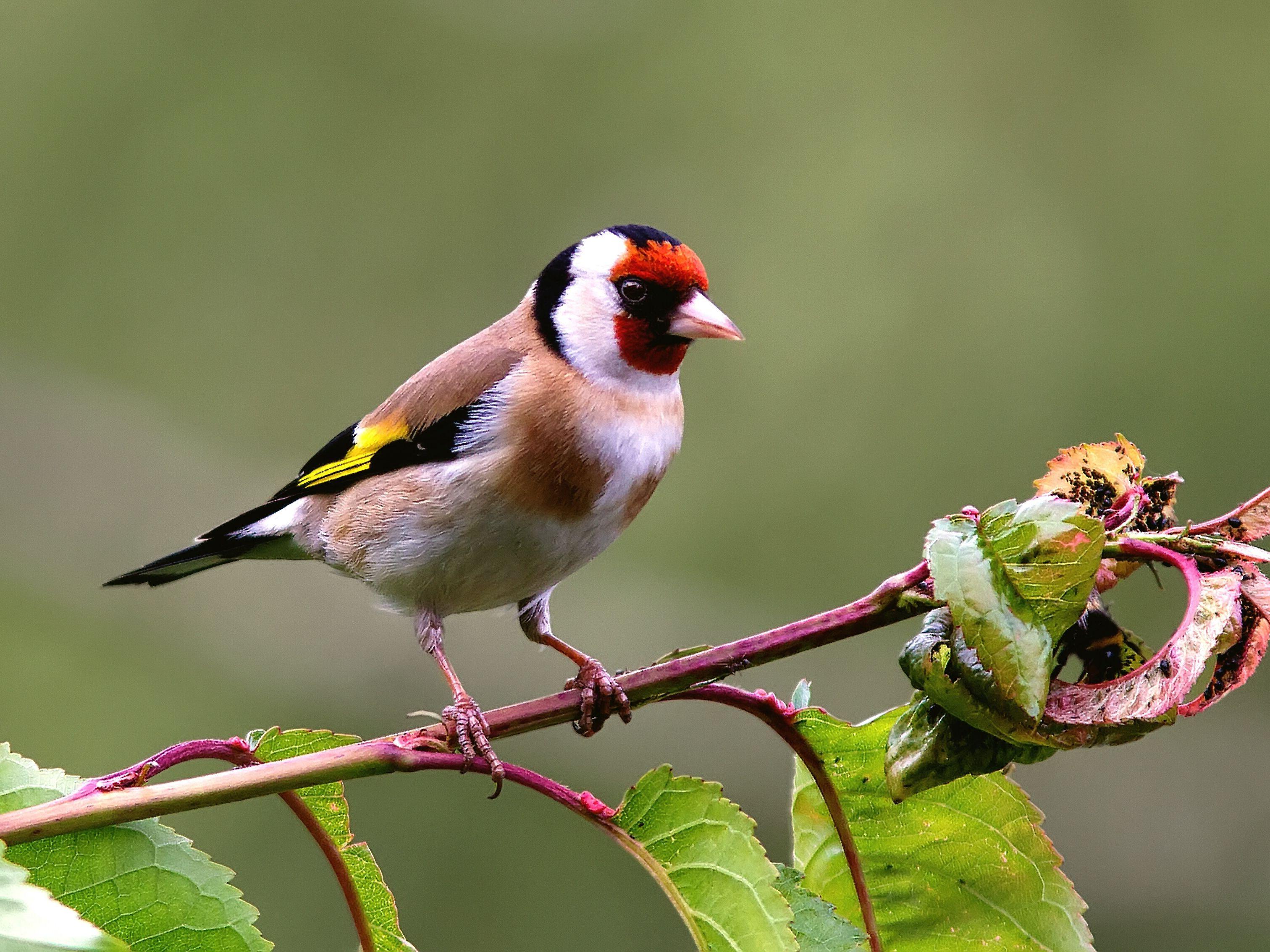 bird perching on branch f215f9b583f e67