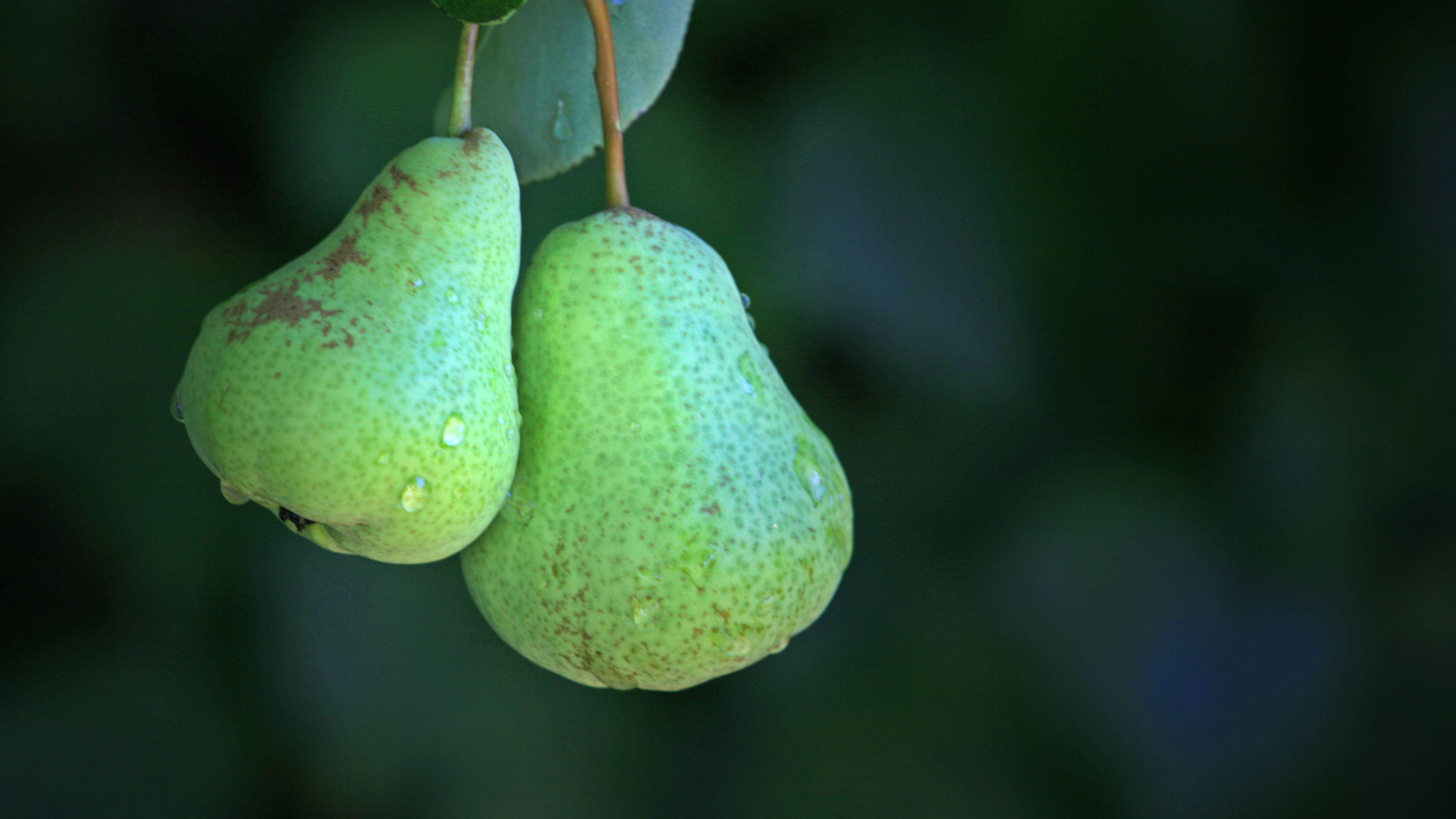 Too Many Pears! Japanese//English