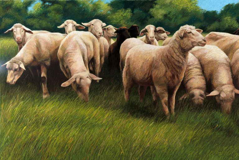 pastel image of sheep