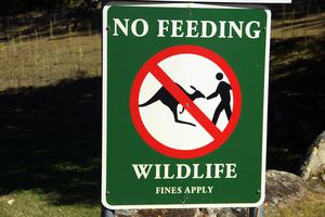 Sign warning people of fines for feeding wildlife in a park at Arakoon in New South Wales, Australia