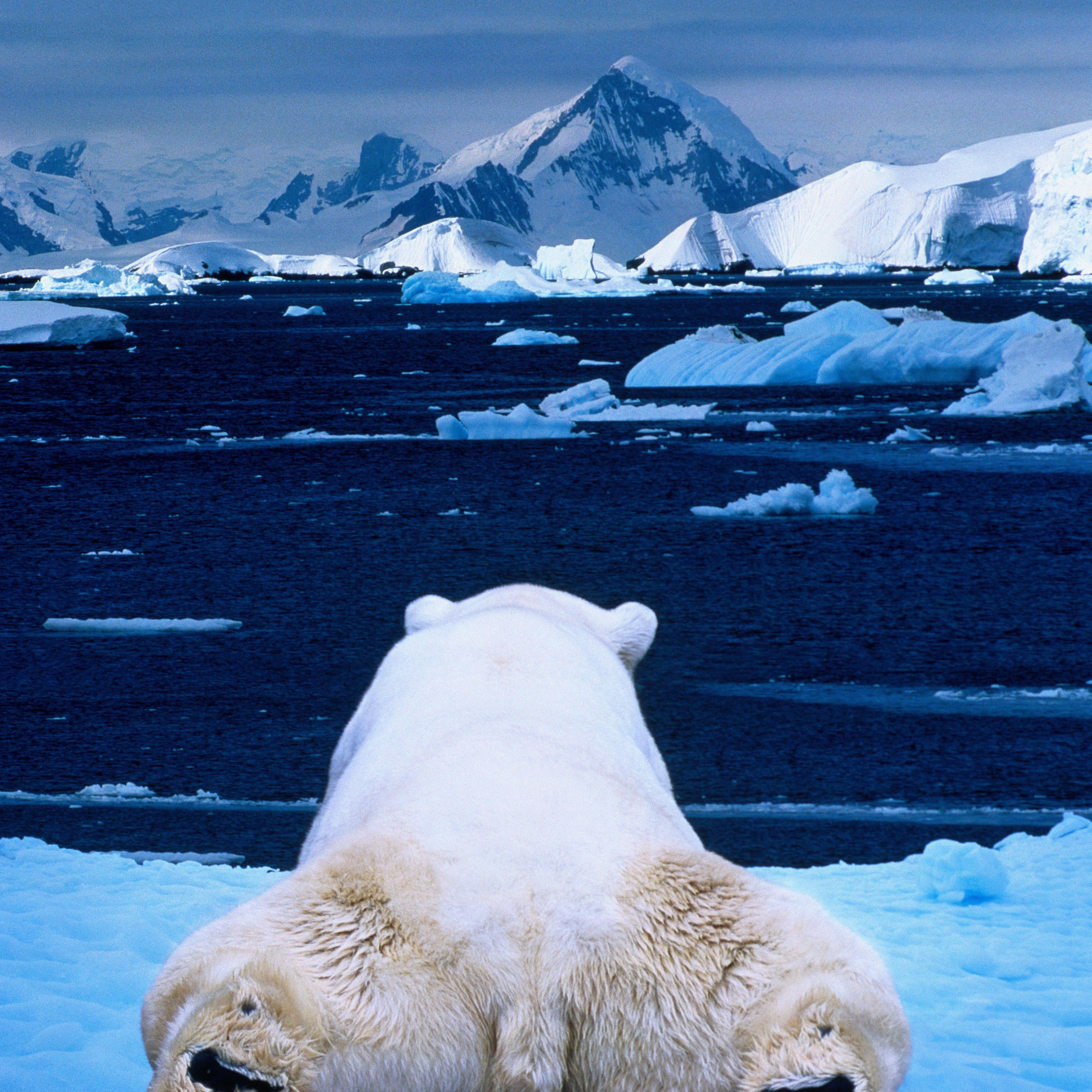 A polar bear lounging on edge of ice.