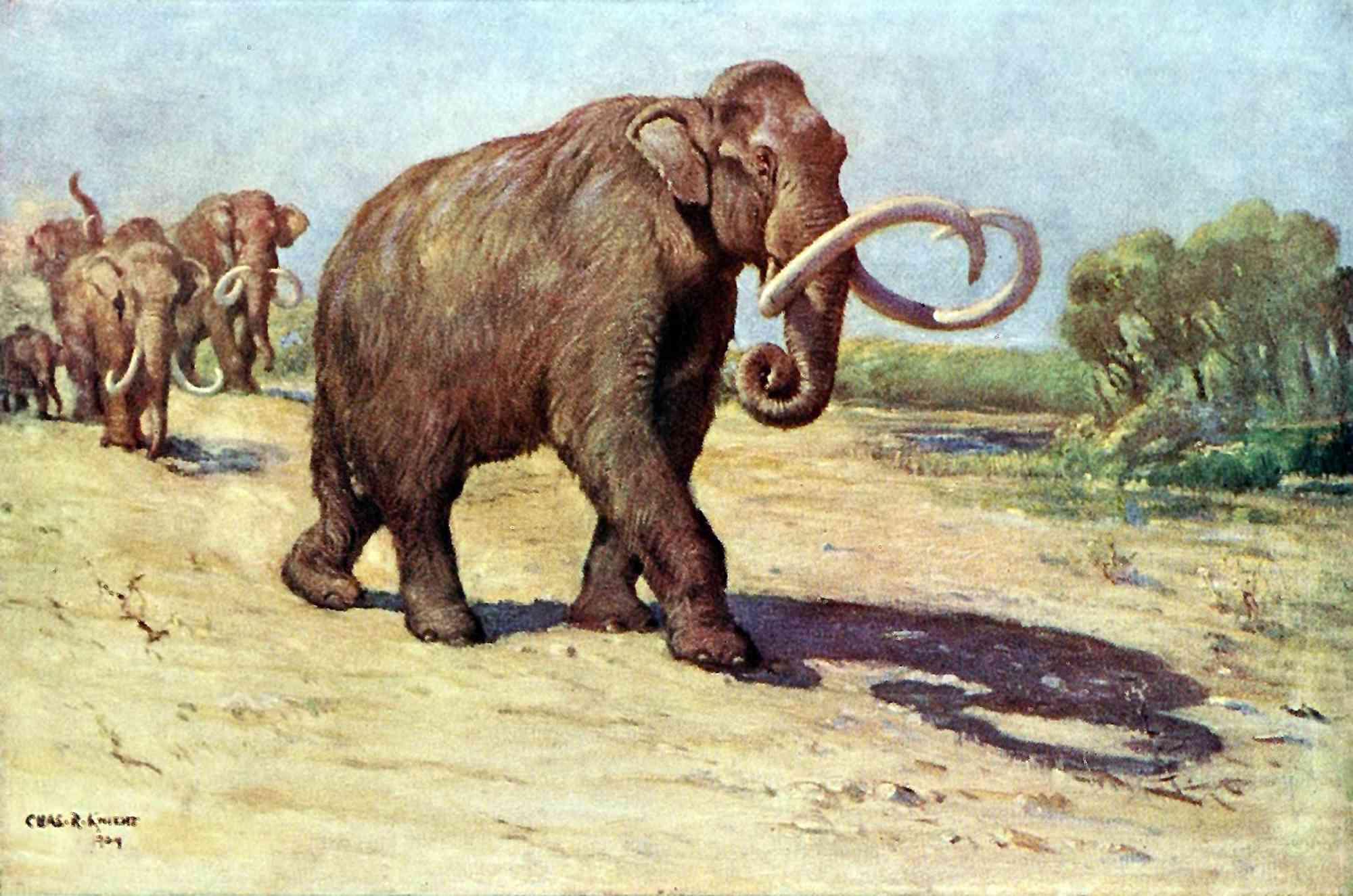 Columbian mammoth, based on the AMNH specimen