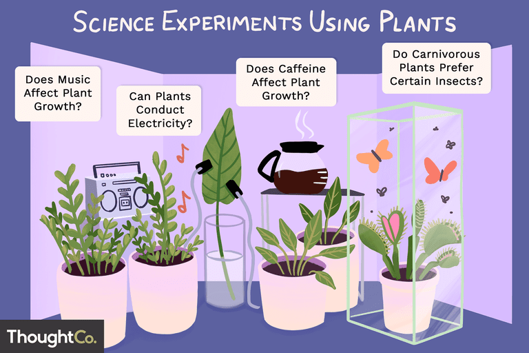 Science experiments using plants. Does Music Affect Plant Growth? Does Caffeine Affect Plant Growth? Do Carnivorous Plants Prefer Certain Insects? Can Plants Conduct Electricity?