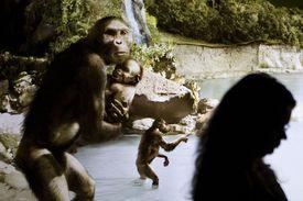Sculptor's Rendering of Lucy (Australopithecus afarensis)