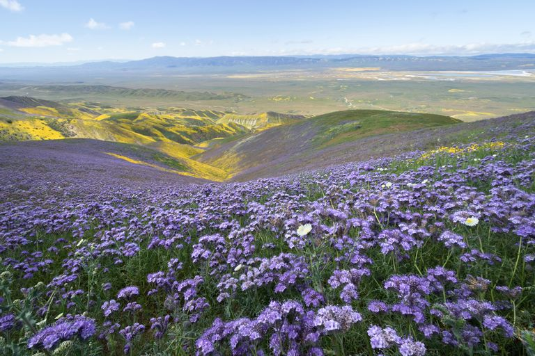 wildflowers in remote area