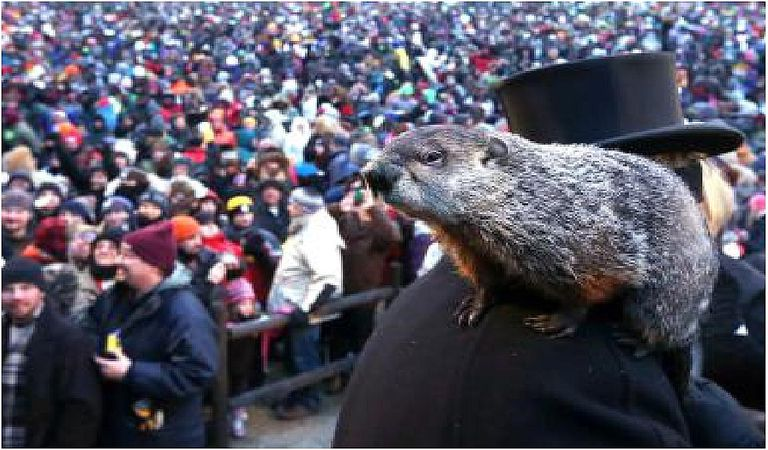 Groundhog at Gobbler's Knob in Punxsutawney, PA.