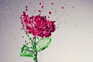Got roses? Learn how to use them to make homemade rose water.