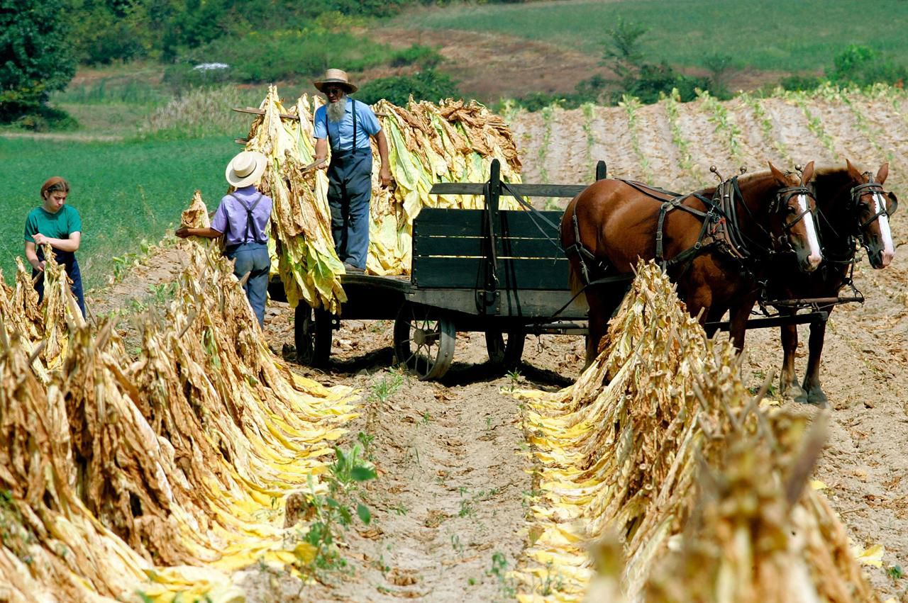 the religion and culture of the amish How religion guides the traditions, lifestyle and beliefs of the pennsylvania amish the pennsylvania amish are a private people who believe that god has called them to a simple life of faith, discipline, dedication and humility.