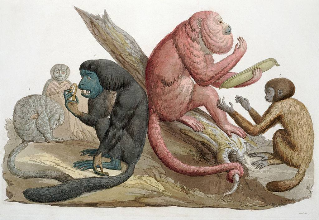 An artist rendering of different primates