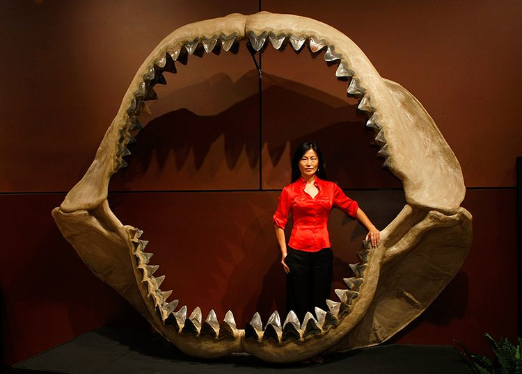 Enya Kim standing in the jaws of a prehistoric shark Carcharodon megalodon