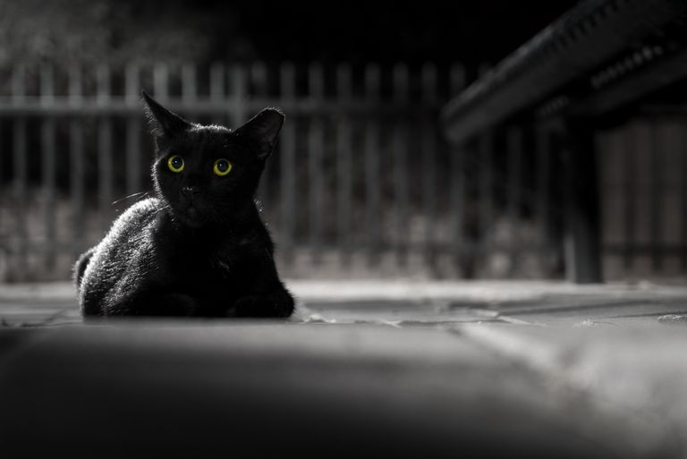 Portrait of black cat at night