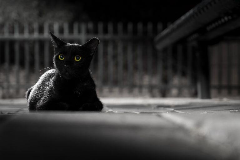 Portrait of black cat at night
