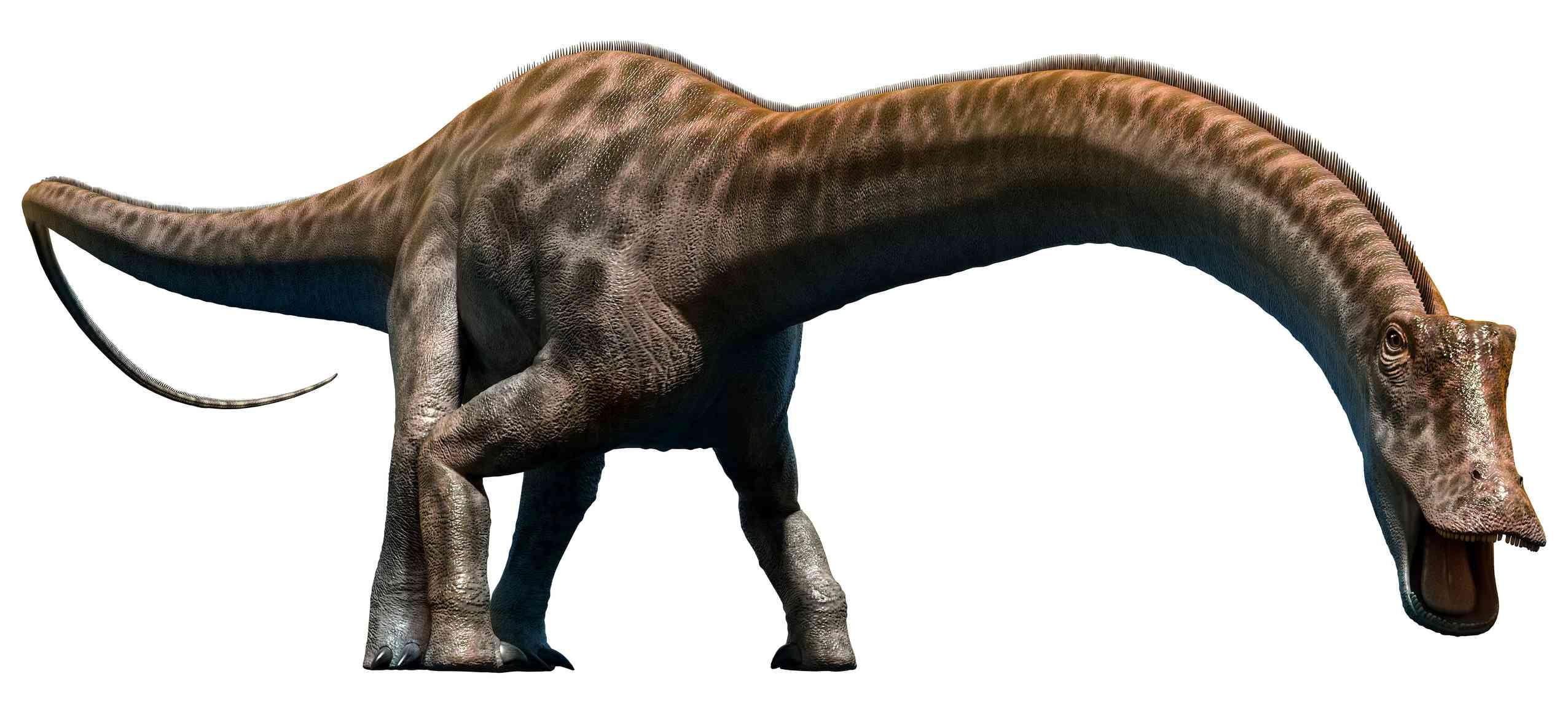 Diplodocus illustration