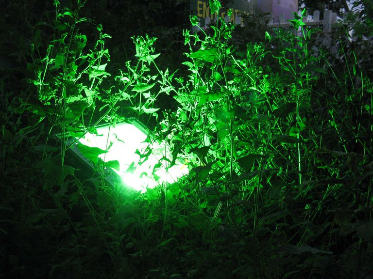Greenery surrounding a grow light to demonstrate photosynthesis.