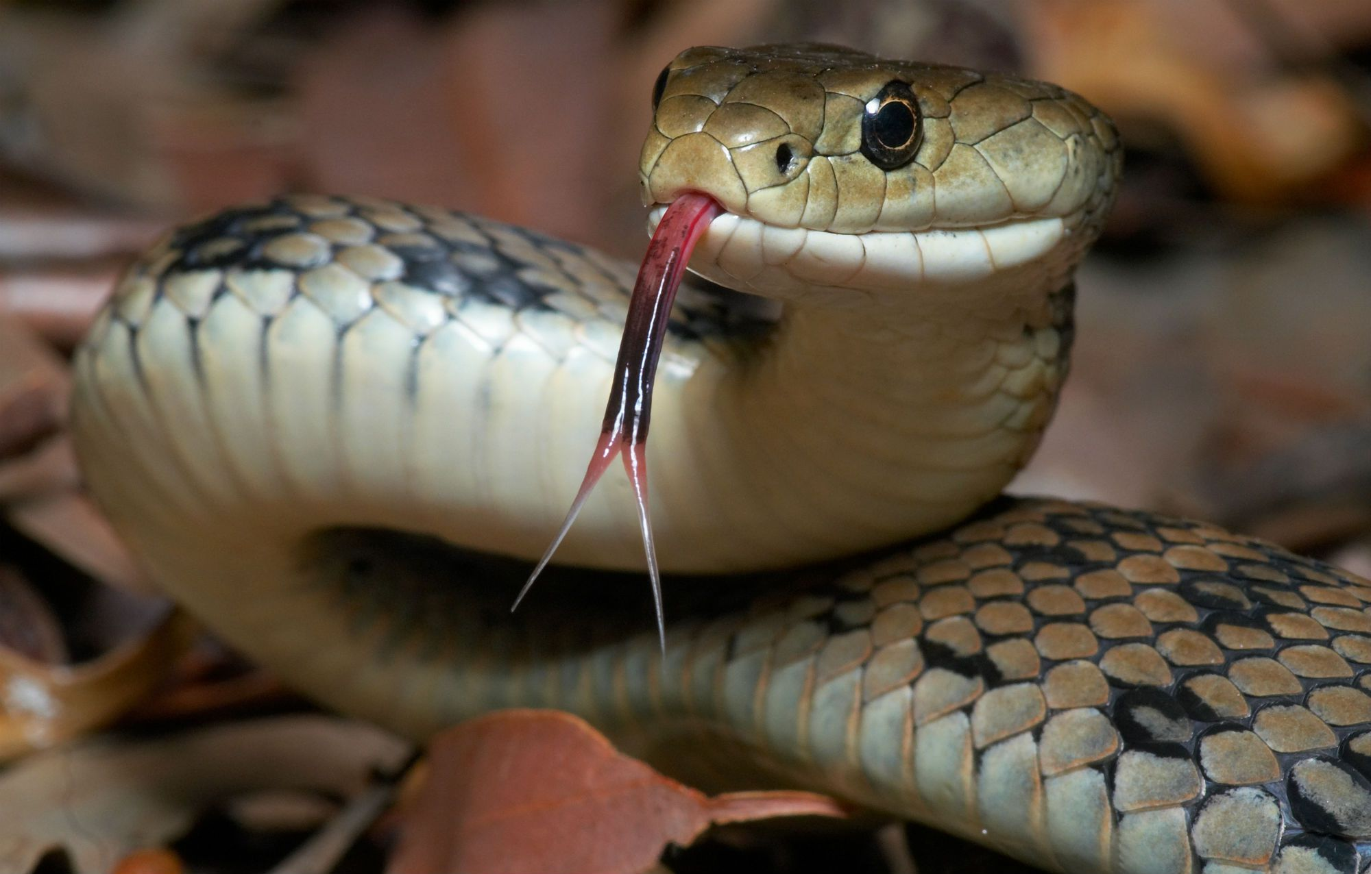 Why Punish the Snake for Telling Truth to Adam and Eve?