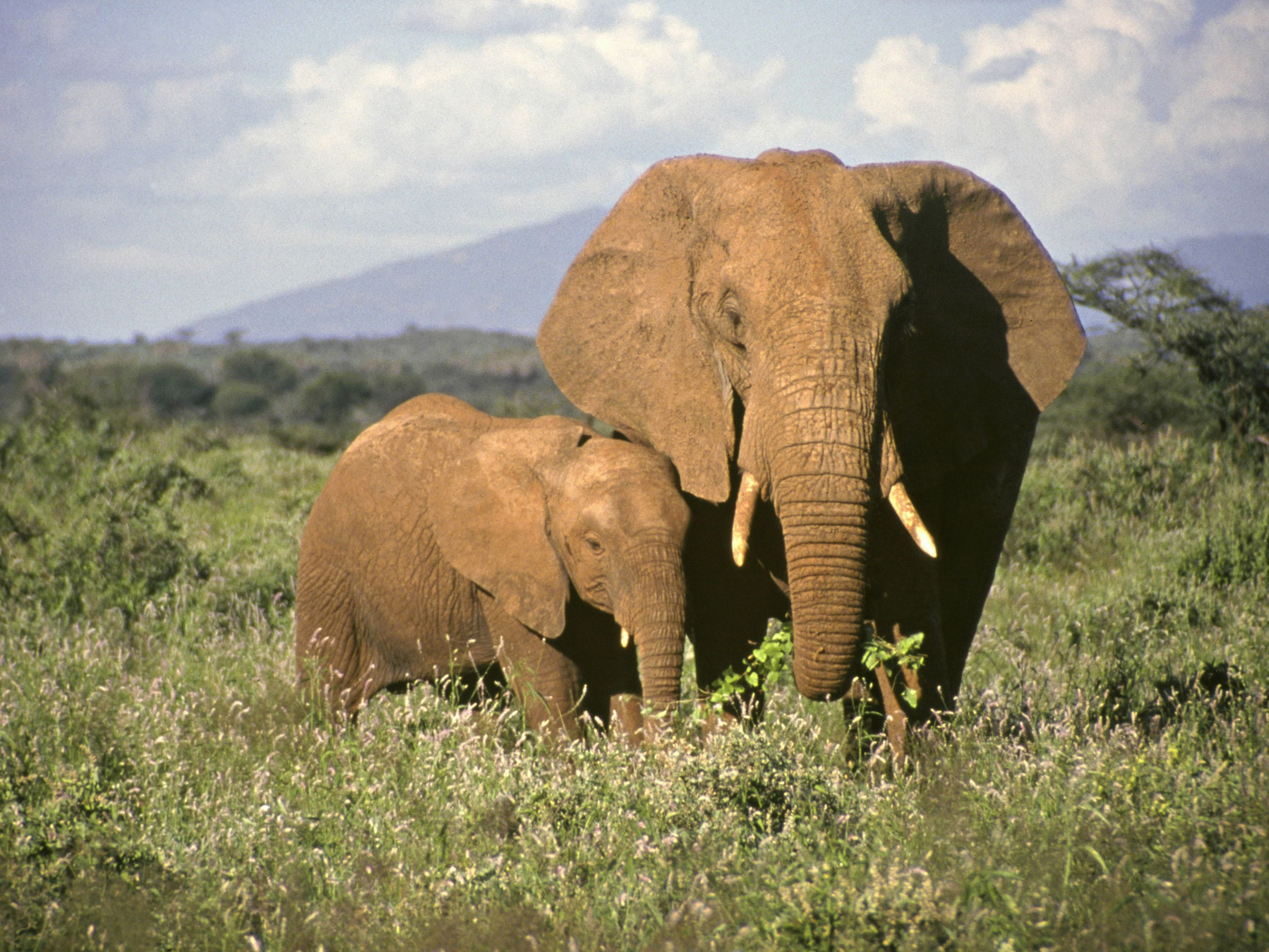 Information and Facts About Elephant Babies