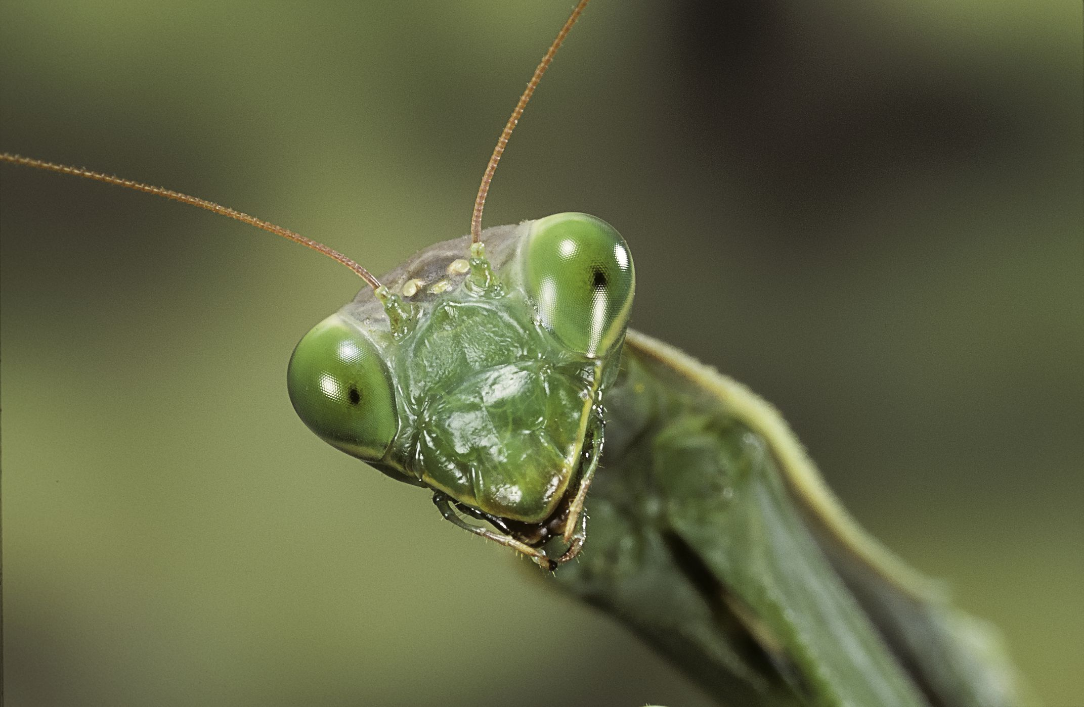 Aninimal Book: Is It Illegal to Kill a Praying Mantis?