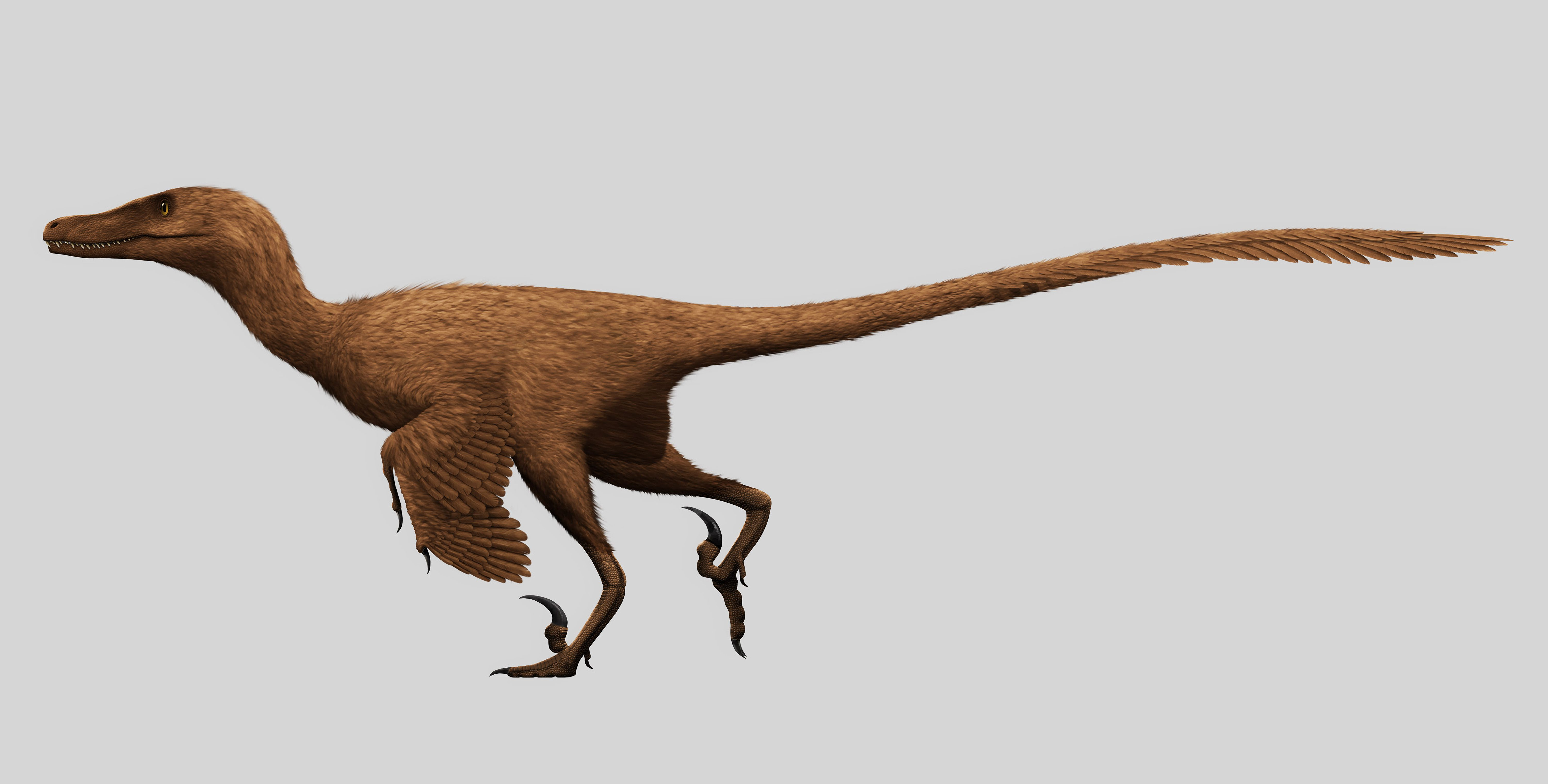 10 facts about velociraptors