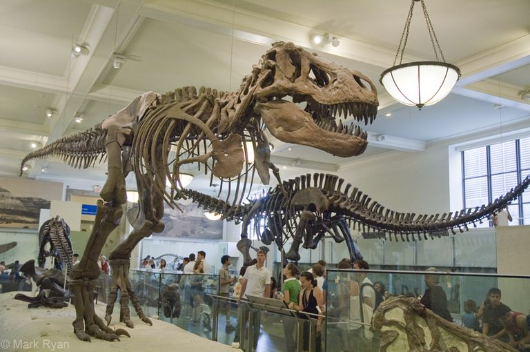 Tyrannosaurus Rex at AMNH