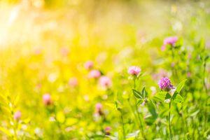 summer nature meadow flowers sunlight day landscape