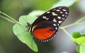 Butterfly resting on a leaf.