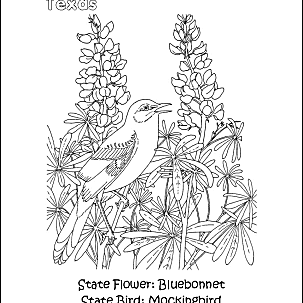 Texas Flag Coloring Page - A Free Travel Coloring Printable | 303x303