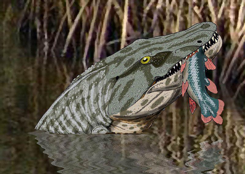 megalocephalus