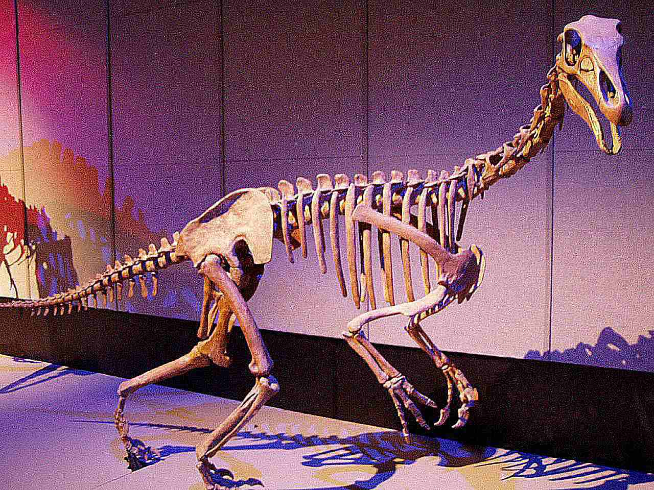 alxasaurus