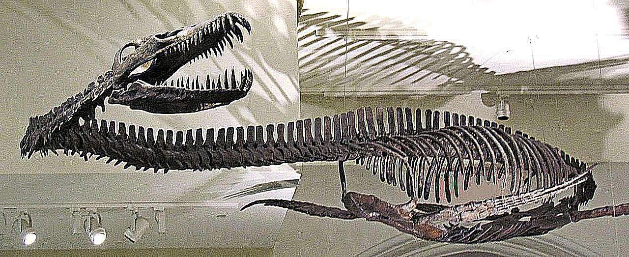 ελασμόσαυρος