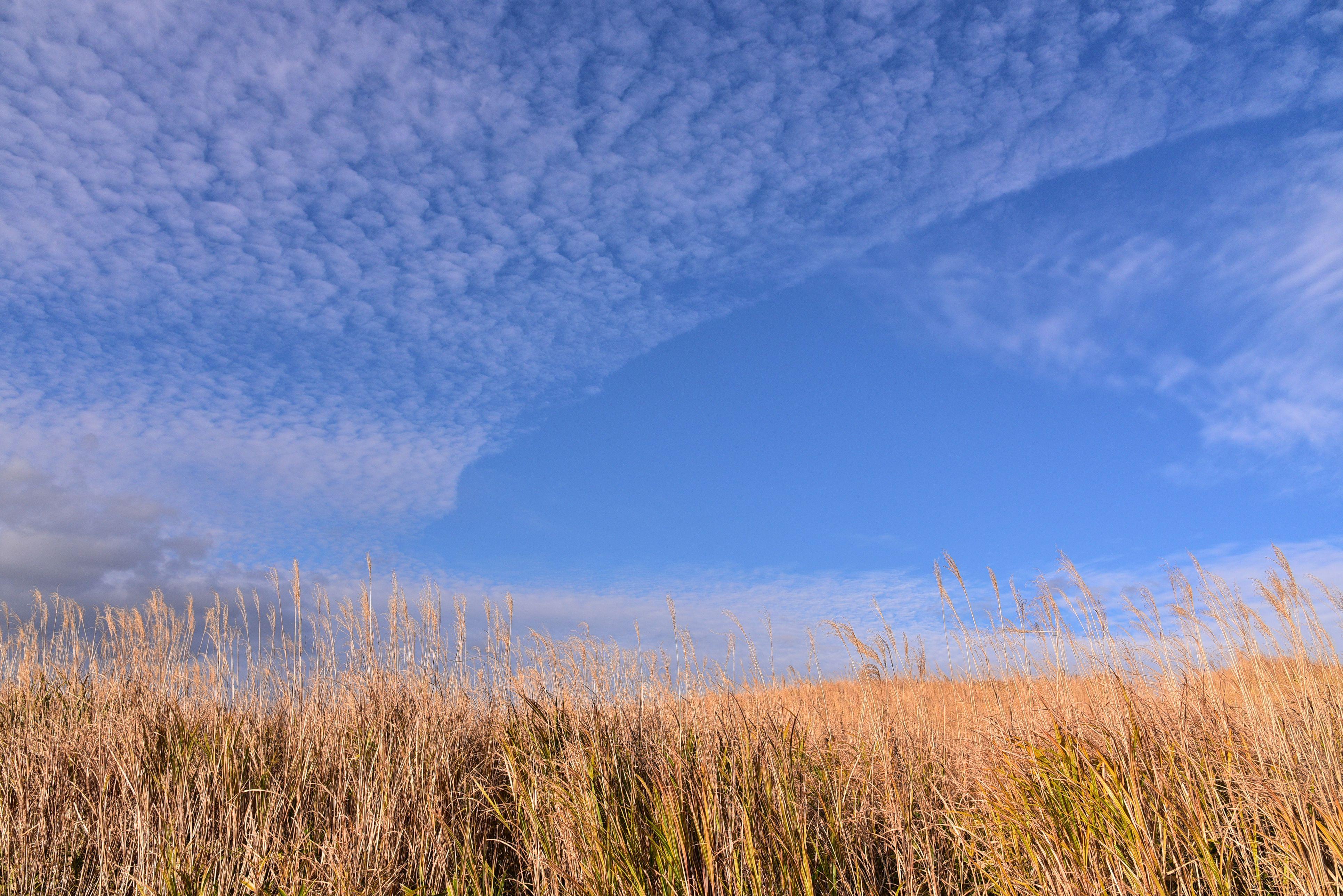 Meadow grass field under blue sky aso milk road, japan