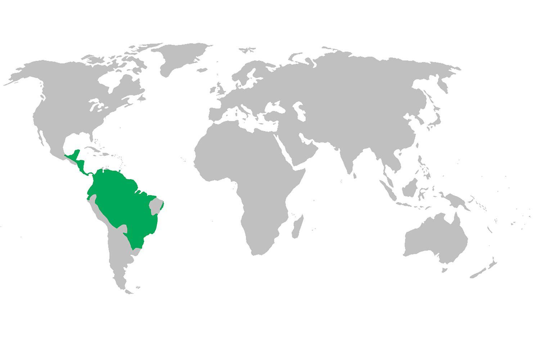 Howler monkey distribution map