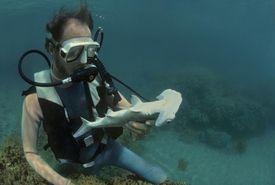 Marine Biologist observing Juvenile Hammer
