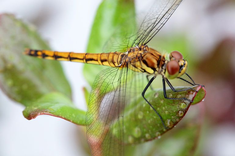 10 Fascinating Facts About Dragonflies