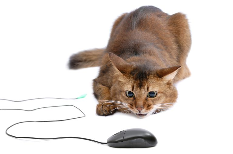 Cat and computer mouse