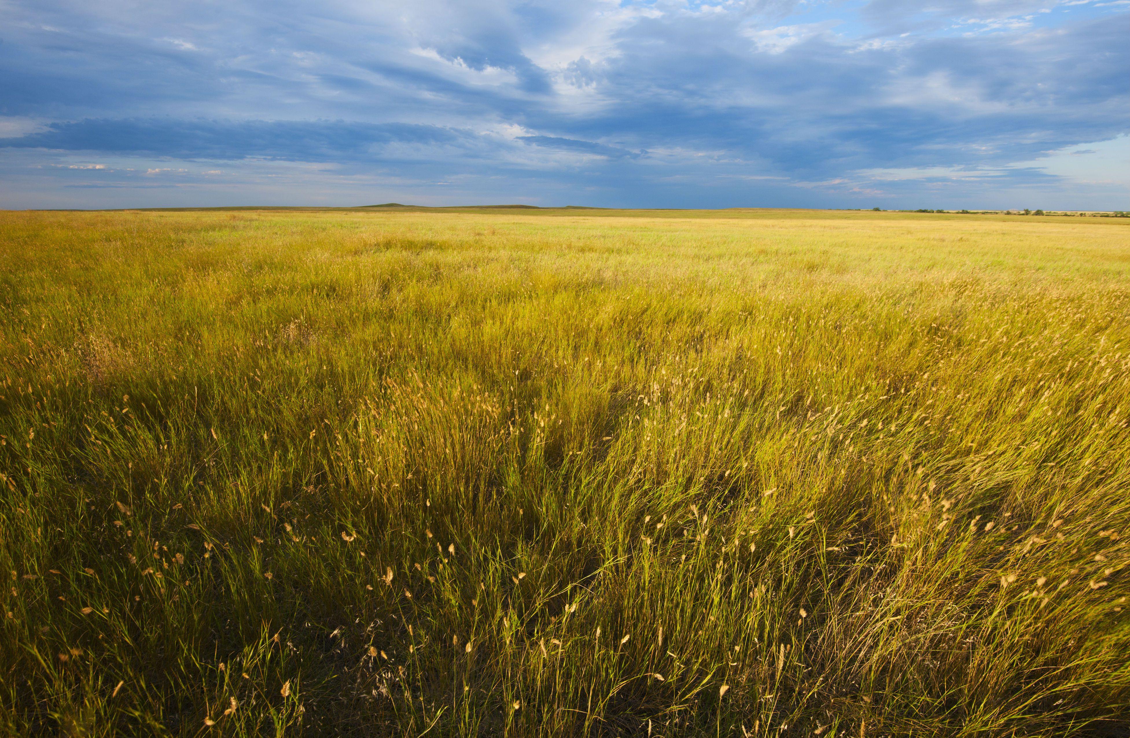 Life In A Temperate Grassland