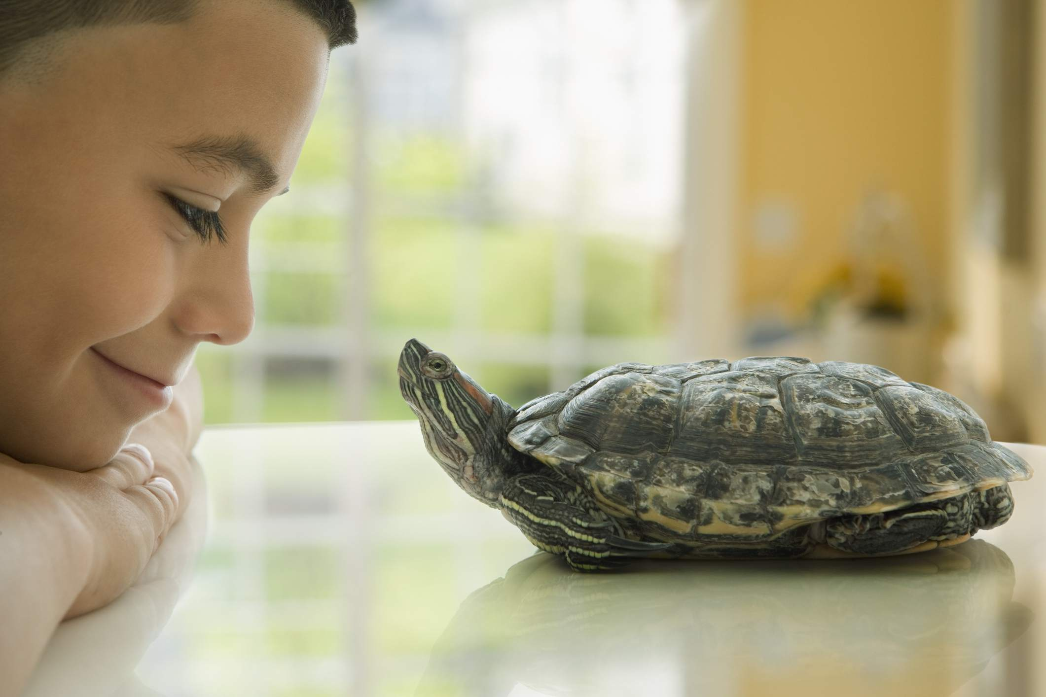 A boy and his pet turtle looking at each other.