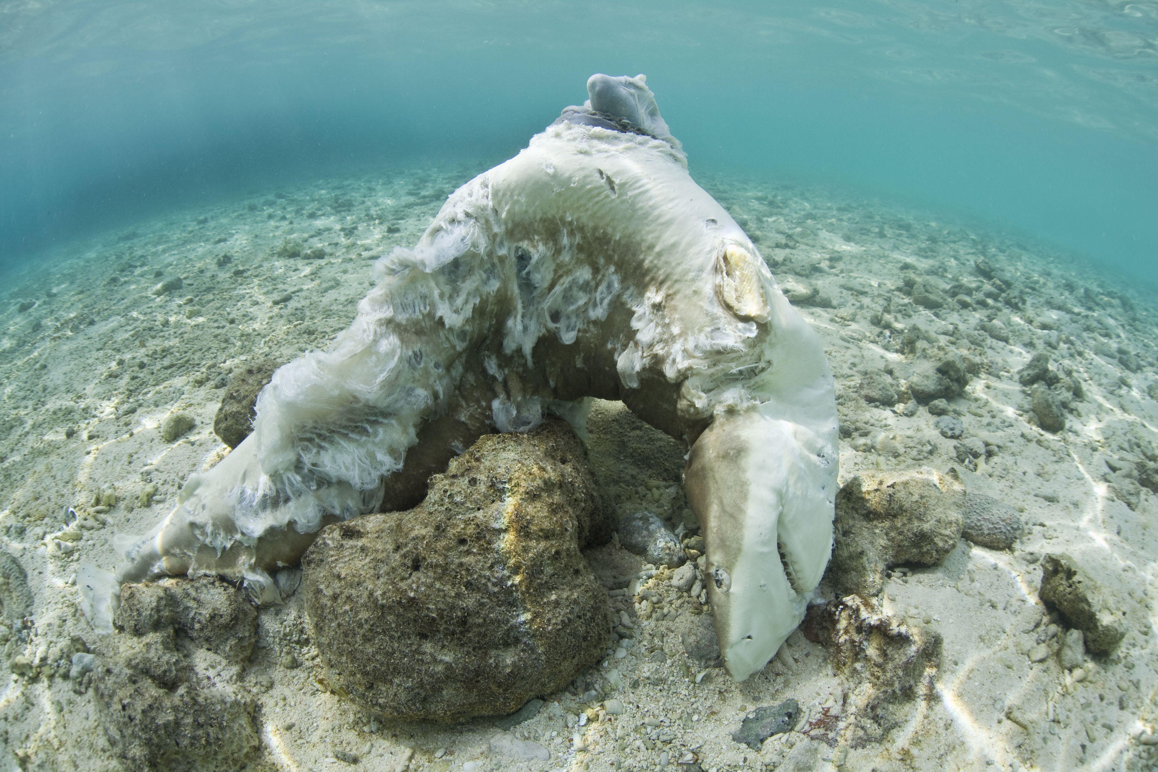 Blacktip Reef shark killed for fins
